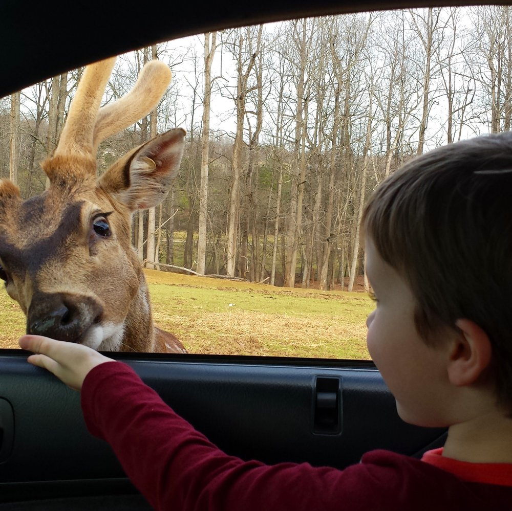 There S No Other Attraction Like This Drive Thru Zoo In North Carolina