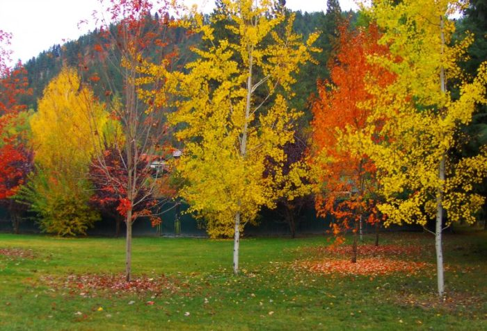Leavenworth is absolutely breathtaking in the fall.