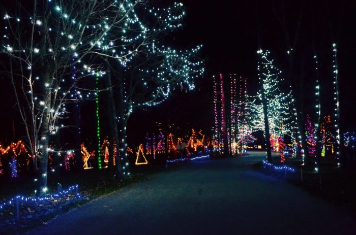 Cincinnati Zoo Holiday Lights