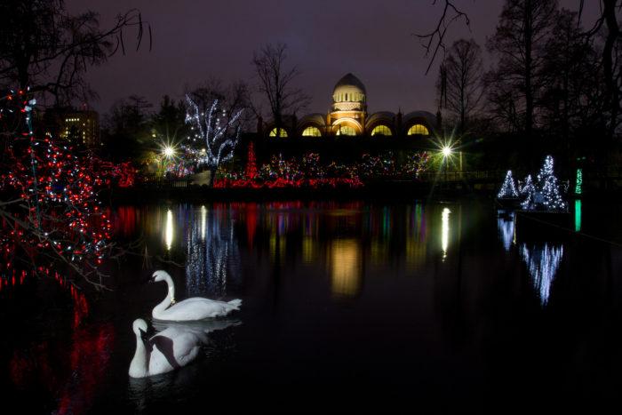 Zoo Festival Lights Cincinnati