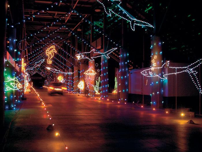 Zoo Lights Memphis