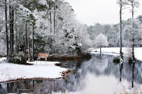 12 Photos Of North Carolina Covered In Snow In The Winter