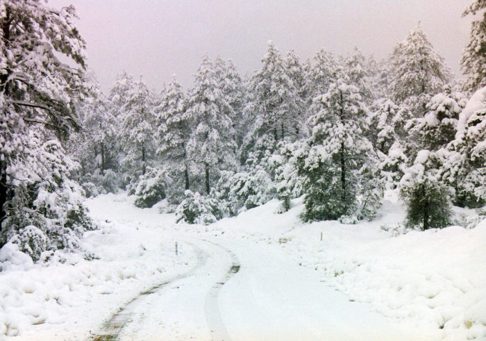 6. A drive through any of our mountain roads will have you dreaming of snowy days, icicles, and sleigh bells.
