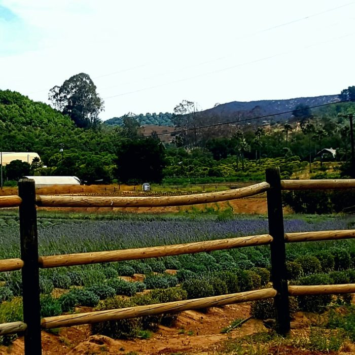 Keys Creek Lavender Farm In Southern California Is A