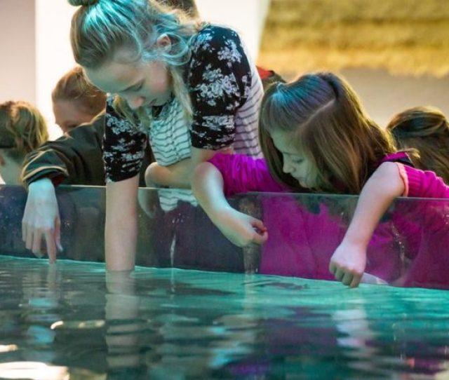 Seaquest Interactive Aquarium Las Vegas Facebook