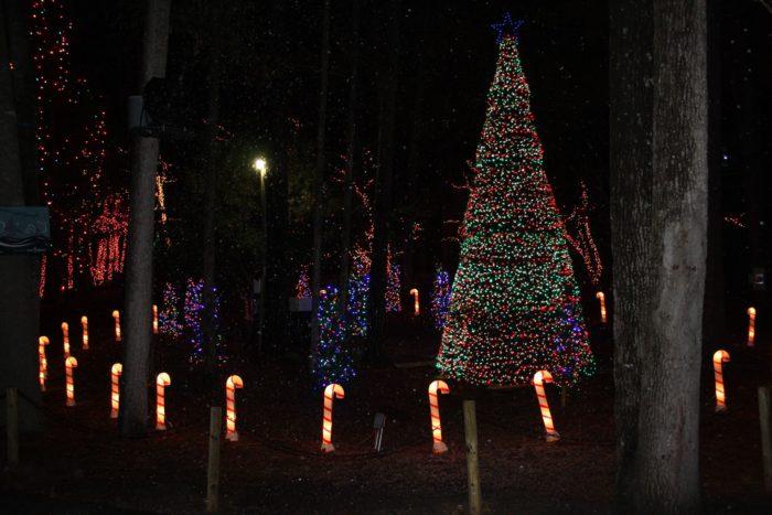 Riverbanks Zoo Lights