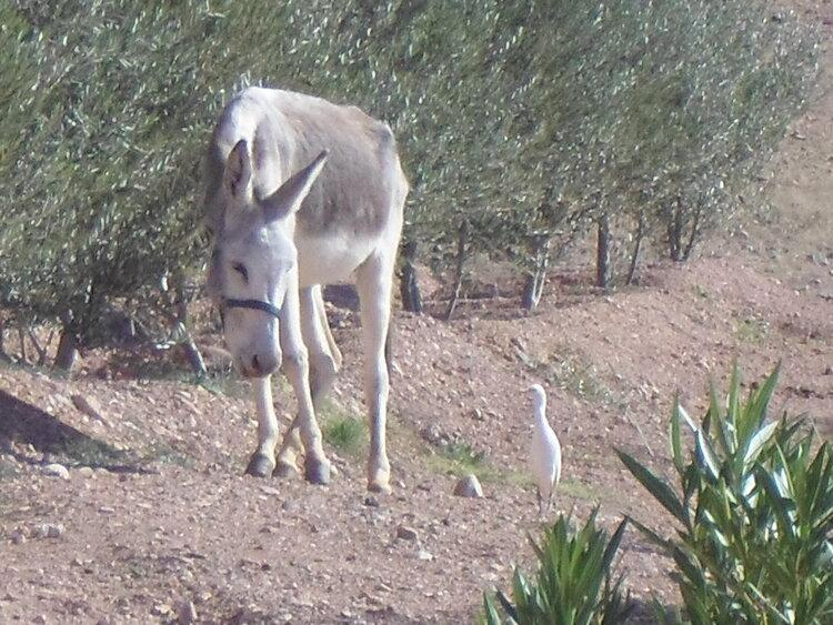 In support of Moroccan donkey and mule charity Jarjeer Mules, a new 2021 calendar will be released in May 2020.