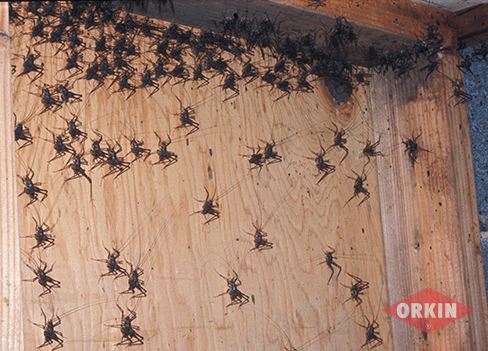 Image Result For How To Get Rid Of Spiders In The Ba T
