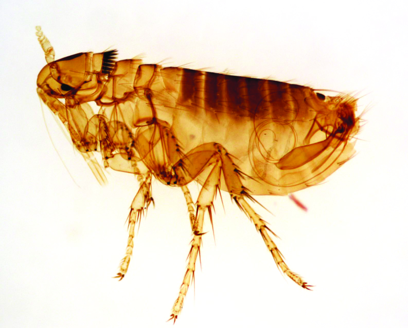 Carpenter Ant Infestation Home