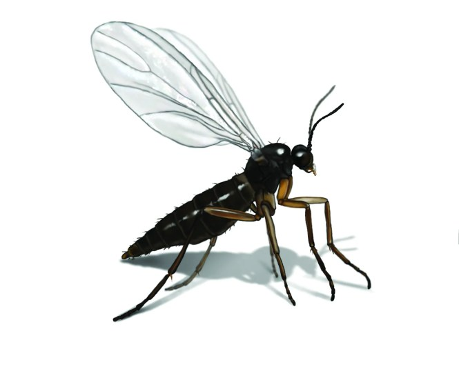 Ants That Fly Aren T Some Kind Of Genetic Mutation There S A Very Good Reason They Exist Flying Ants Or Alates As Entomologists Refer To Them