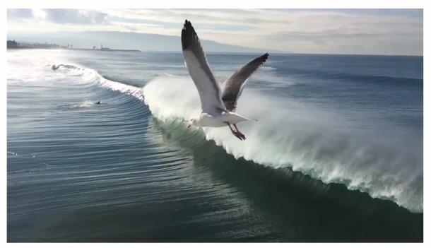 Чайка пролетает над набегающей волной в Калифорнии, снято на iPhone