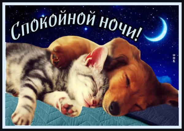 Душевная открытка спокойной ночи - Скачать бесплатно на ...