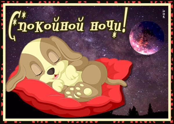 Картинка спокойной ночи с собачкой - Скачать бесплатно на ...