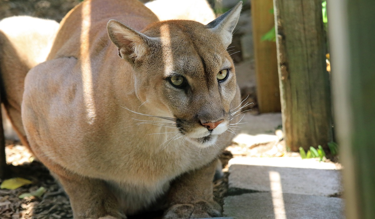 8 Year Old Colorado Boy Attacked By Mountain Lion In