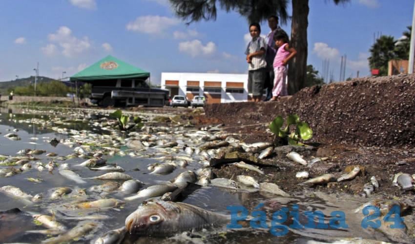 Que se suspendan las descargas de aguas residuales en la laguna, que se monitoreen constantemente los niveles y la calidad del agua, como se hace en Chapala. Además de retirarle el exceso de nutrientes a Cajititlán, incorporando otras especies de vegetación ribereña/Foto: Cuartoscuro