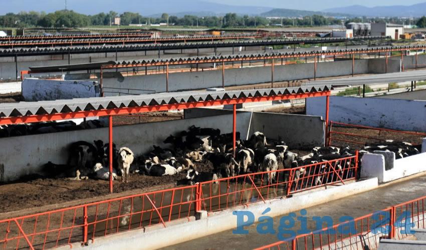 Las importaciones de leche en polvo aumentaron de manera extraordinaria, con efectos letales para la industria lechera nacional, pues además, el producto extranjero está enriquecido con grasas vegetales, minerales y proteínas artificiales/Foto: Cortesía