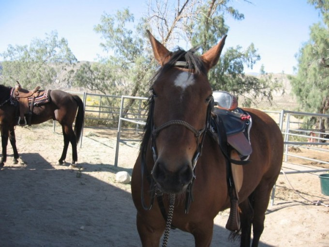 Horse Games  Games You Can Play on Horseback   Poway  CA Patch