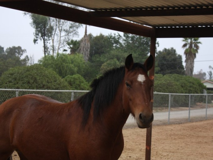 Horse Games  Games You Can Play on Horseback   Poway  CA Patch     Horse Games  Games You Can Play on Horseback 0