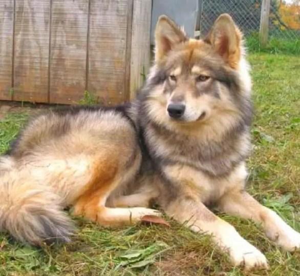 Cherokee Names for dog