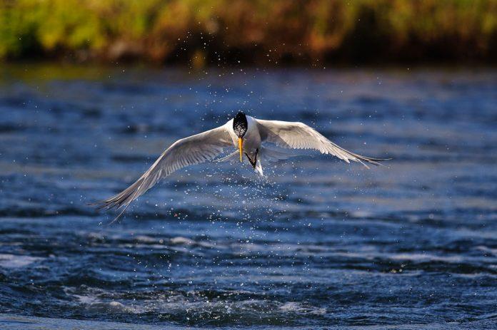 ถ่ายภาพนก ความเร็วชัตเตอร์ 1/2000 วินาที, Source : Photographylife