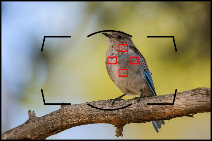 Nikon Dynamic-Area AF