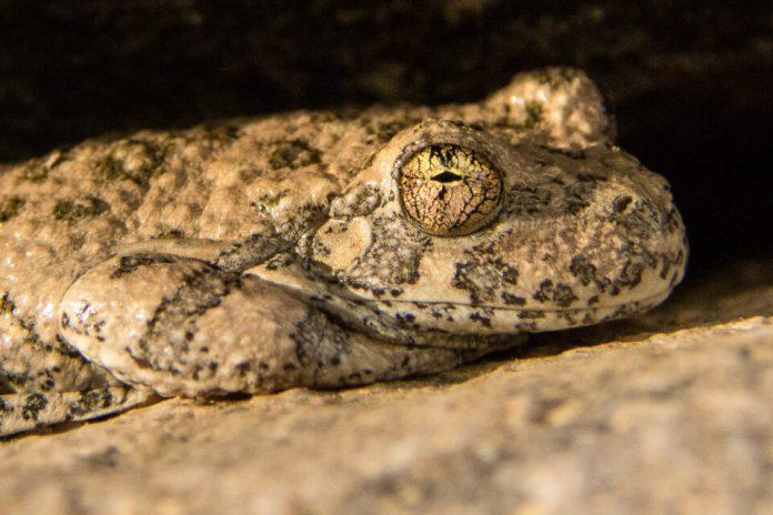 Verm-frog-1-1-D7200-0931-2