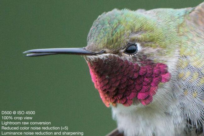 Broad-tailed Hummingbird - Nikon D500, 500mm f/4 + 1.4x T.C., ISO 4500 1/2000s f/10