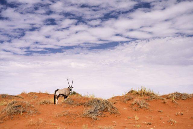 Onyx in the Desert