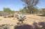 1344 E HATCHER Road, Phoenix, AZ 85020