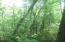 Heavily Wooded Lot