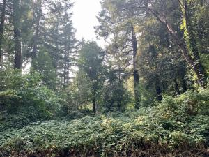 126 Tree Top Lane, Willow Creek, CA 95573