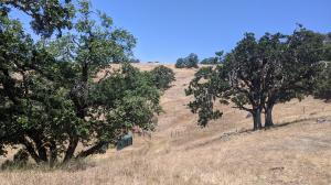 850 Bear Creek Road, Dinsmore, CA 95526