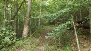 Cox Creek Lane, Tazewell, TN 37879