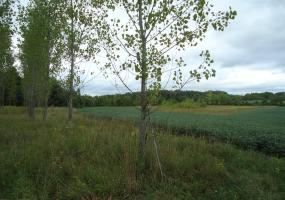 0 Pease Road, Bellevue, MI 49021, ,Vacant Land,For Sale,Pease,230023