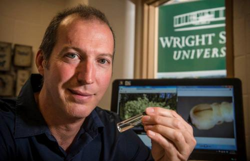 Researcher finds emerald ash borer may have spread to different tree
