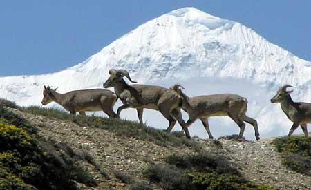 Himalayan Encounters