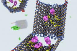 DNA Nanobot Shell