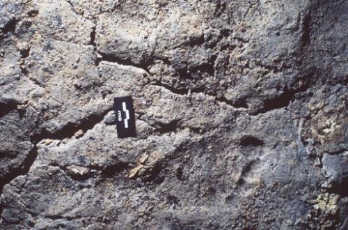 Le più antiche orme di moderno-giorno l'uomo si vedono nella grotta Chauvet, nel 1999