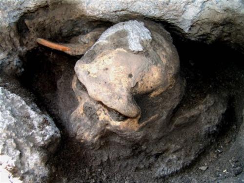 1.8M-anno-vecchio cranio dà un'idea della nostra evoluzione