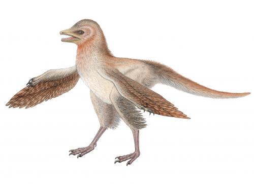 Fossile di dinosauro Nuove sfide teoria dell'evoluzione degli uccelli