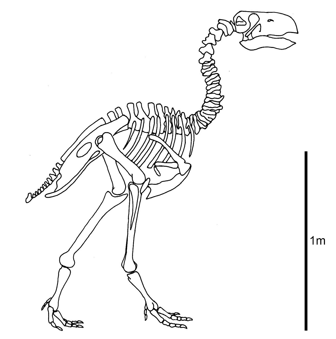 Research Suggests Terror Bird S Beak Was Worse Than Its Bite