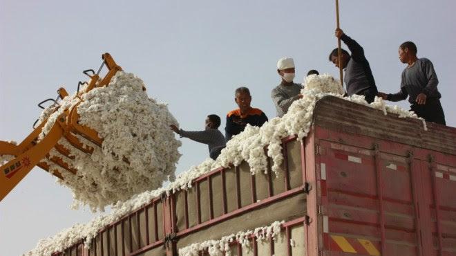 Better Cotton Initiative, algodón, BCI