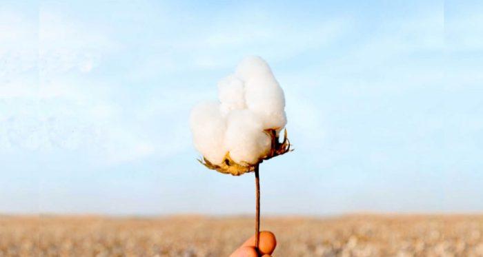 Tdextile Exchange, algodón orgánico