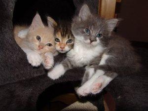 猫, 赤ちゃん, トリオ