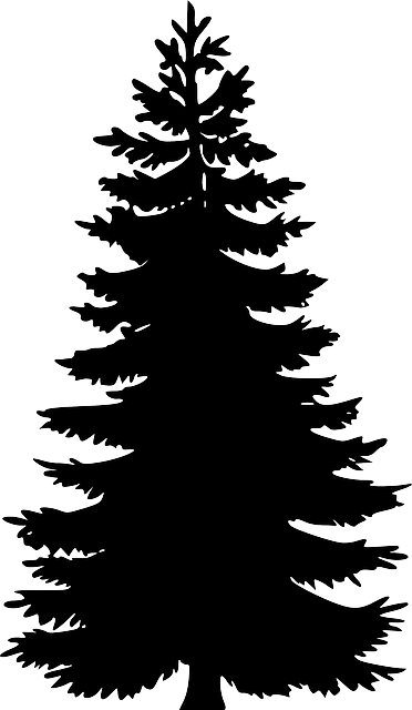 White And Oak Art Tree Fir Clip Black And