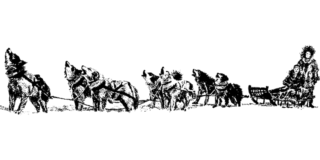Free Vector Graphic Sledge Dogs Team Sleigh Dogsled