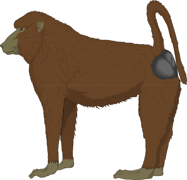 Baboon Brown Long Free Vector Graphic On Pixabay