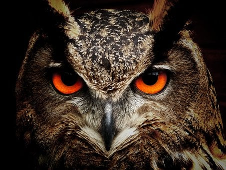 4 000 High Quality Owl Pictures Images Hd Pixabay