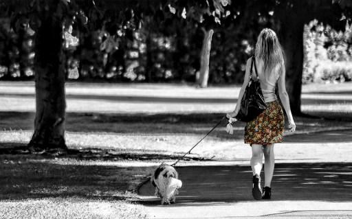 女の子, 犬, 徒歩, 公園, 色, パス, 木, グレー犬, グレーのツリー, グレーの徒歩, グレーパーク