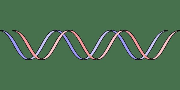 Dna Gene Genetics 183 Free vector graphic on Pixabay